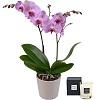 Déduction de 5€ sur L'Orchidée Papillon