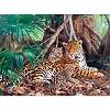 Remise de 9% sur Jaguars dans la forêt