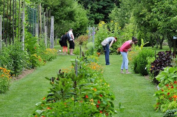 Plantes Et Jardins Forum